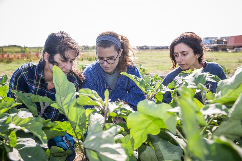 Students and their instructor harvest greens and vegetables at the farm on the Elgin campus.